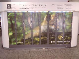 動物の写真で彩られたロッカー